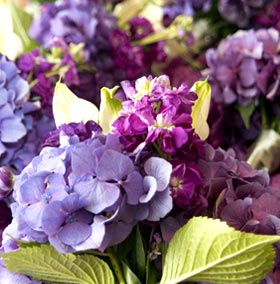 Purple hydrangea, purple stock with white mini-Calla Lilies