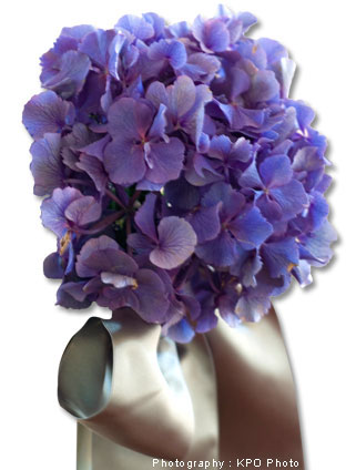 Puddle hydrangea with satin bow